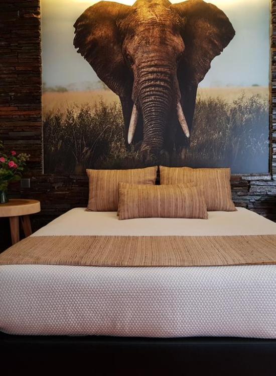 Suite Elefante